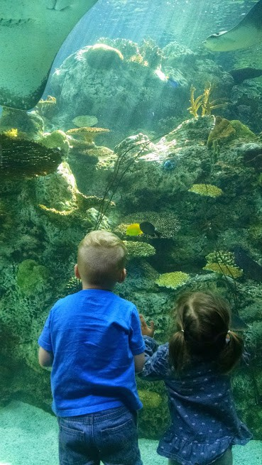 Little boy and girl standing in front of aquarium glasss