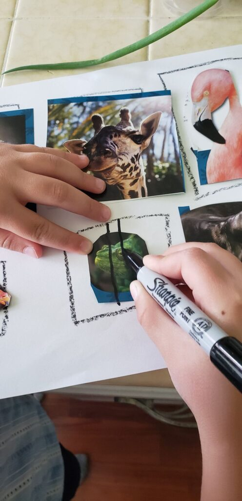 toddler drawing lines over zoo animal cut outs