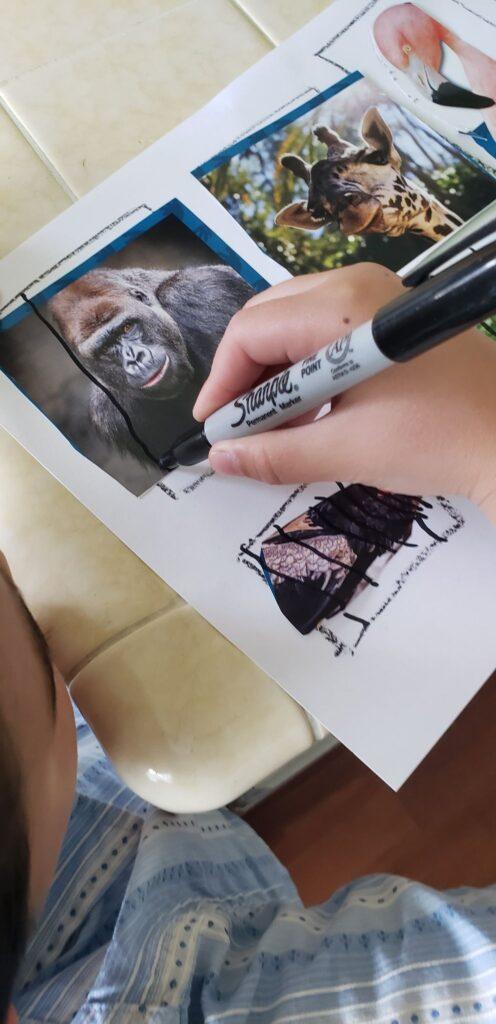 preschooler drawing sharpie lines over zoo animals