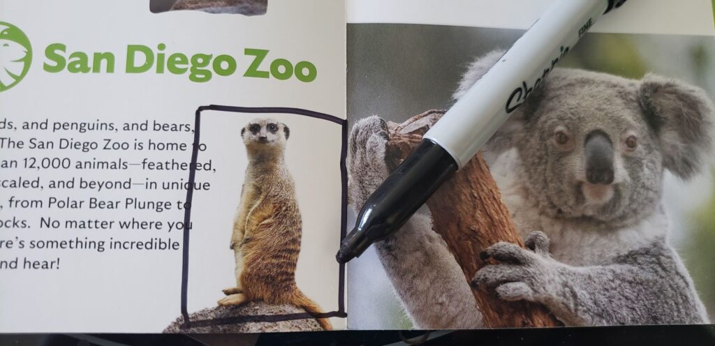 meerkat with a black rectangle drawn around him